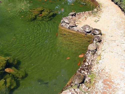 Laghetti artificiali per tartarughe teli per laghetto da for Lago per tartarughe