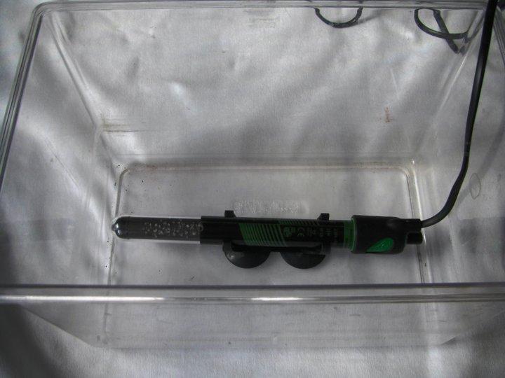 Costruire un incubatrice per uova di tartaruga tartaweb for Termostato tartarughe acqua