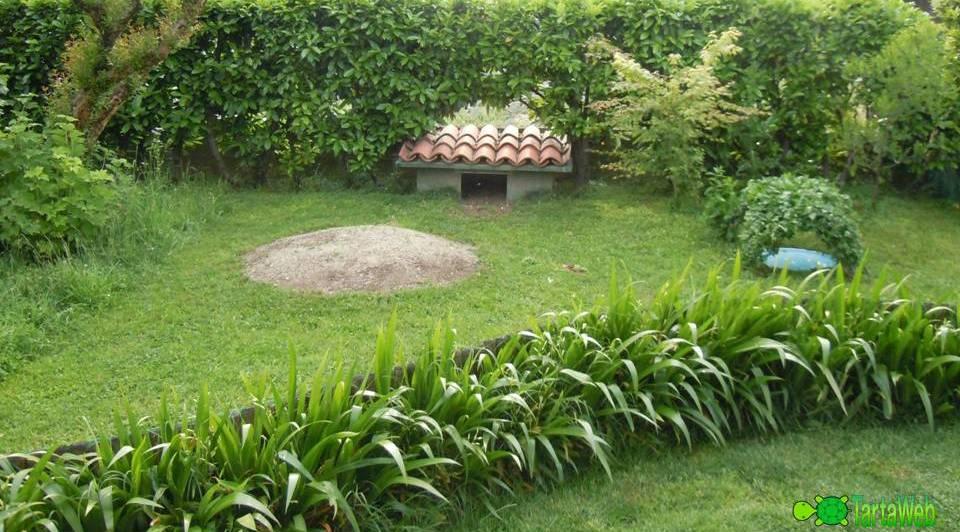 Norme per un recinto testudo tartaweb for Letargo tartarughe acquatiche
